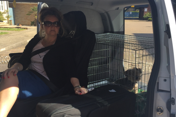 Italy Pet Relocation